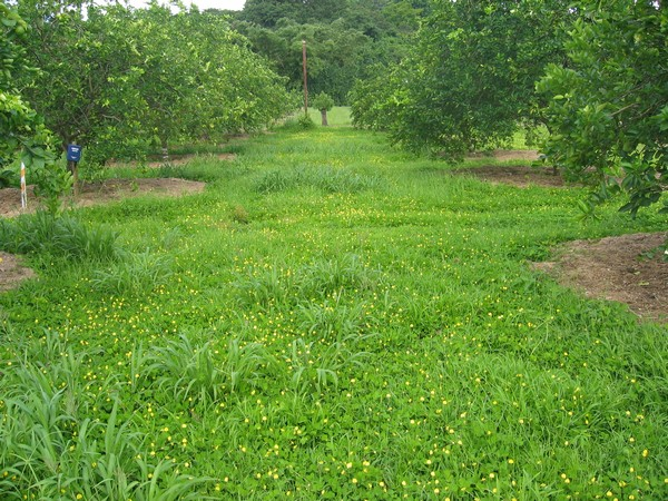 agronomical vs horticultural crops Pdf notes for ibps afo mains 2017-18 different horticultural crop varieties crops and cropping system agronomical crops in india.