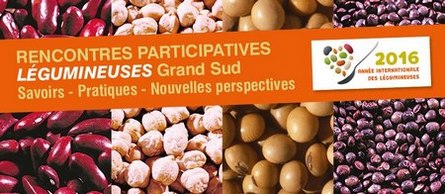 Rencontres participatives Légumineuses Grand Sud